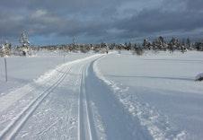 Hedmarksvidda Med Skiloper Foto Atle Maurud