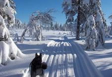 Vinteraktivitetsbilde20X30 1030X686