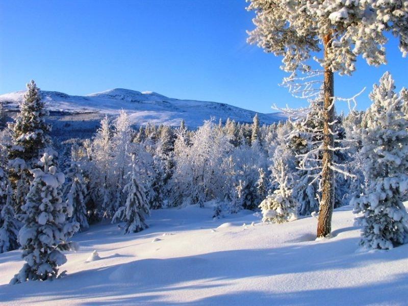 Gjør en god investering på Savalen - Unike hyttetomter på Savalen, nærhet til hotellet, ski og sykkelløyper.