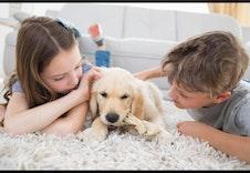 Shutterstock 256179865