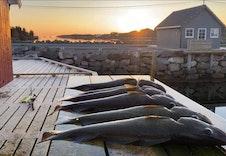 Gode fiskemuligheter i området.