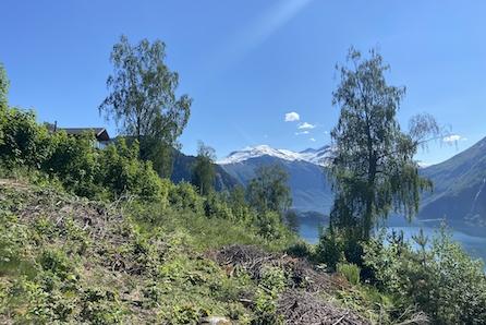 VALLDAL/LINGEÅSEN:  Tomteperle med fantastisk utsikt over Storfjorden! Vær med på å designe di eiga hytte!
