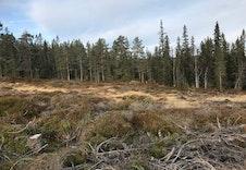 Skogen som nabo