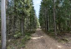 Fine turstier i skogen rett ved.