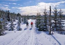Ringkollen. Milevis av skispor og turstier.