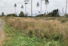 Høstbilde av feltet