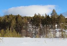 Spurvtrøa er flat med tilgrensende furuskog, et dalsøkk skiller boligfeltene