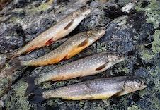 Muligheter for fisking