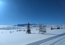 Skispor 50 meter fra hytta.