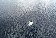 Digernesvatnet er eit naturreservat for fuglar.
