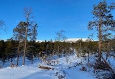 Vinter 13
