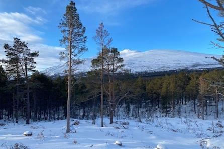 2.byggetrinn. Store tomter rett ved skiløype og 10 minutter unna alpinbakken. Ca 1 t 15 min kjøretur fra Trondheim