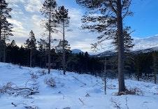 Vinter 6