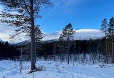 Vinter 7