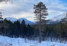 Vinter 8
