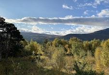 Utsikt til fjellheimen