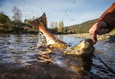 Gode muligheter for fiske i lakseelv, se www.merakerbrug.no