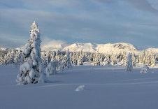 Flott naturterreng innover fjellheimen