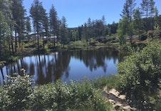 Dammen på feltet