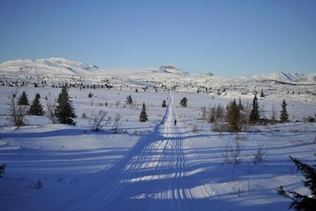 Skagahøgdi/Gol - 4 tomter på toppen av skisenteret, alpint og langrenn, flott turterreng, nært Gol sentrum / tog og buss