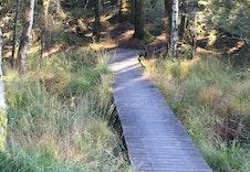 Herlig med en tur i skog og mark!